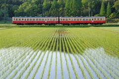 ローカル線 ~ 緑のアート