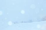 まあるい雪のメロディー
