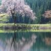 水彩物語 ~田屋の一本桜~