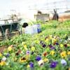ひととき ~小さな春~