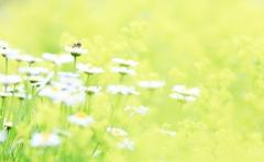 花畑のハッチ