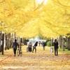 銀杏の並木道