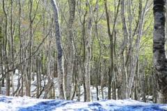森のめざめ