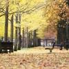 秋の休日Ⅱ ~待っているベンチ~