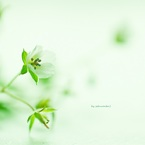 CANON Canon EOS Kiss X4で撮影した植物(野の花)の写真(画像)