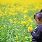 CANON Canon EOS 6Dで撮影した(菜の花摘んでⅡ)の写真(画像)