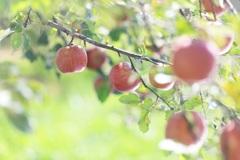 りんご物語