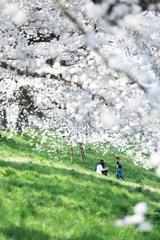 桜の木の下で ~family~