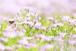 お花畑とセセリちゃん