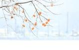 柿の雪ぼうしⅡ