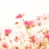 風のように花のように