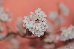 カラーシフトして撮った桜