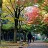 晩秋の姫路公園