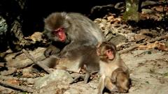 銚子渓 お猿の国 2