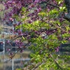 春の服部大池