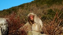 銚子渓 お猿の国 1