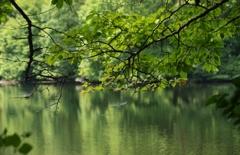 寂光に包まれるため池