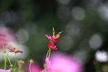花を撮ったら違うものが写った件‐1