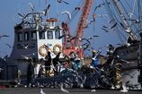 漁船に群がるカモメ