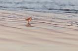 浜に魔法がかかる時