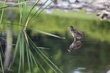 緑の池に佇む