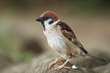 みんなの野鳥図鑑 #15