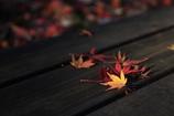 ベンチの上の紅葉