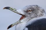 みんなの野鳥図鑑 #27