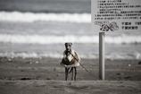 漁協の番犬