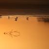 水辺の夕景