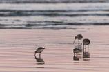 夕暮れの浜を漁る