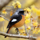 みんなの野鳥図鑑 #22