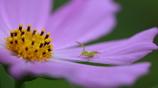 花を撮ったら違うものが写った件‐3