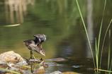 緑の池の天使