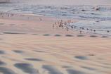 残照に浮かぶ砂の紋様
