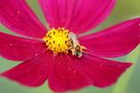 花を撮ったら違うものが写った件‐2