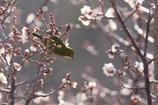 蕾、ところにより花