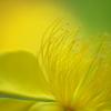 初夏の花 2