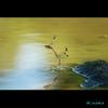 秋のトンボ 4 コノシメトンボ 産卵