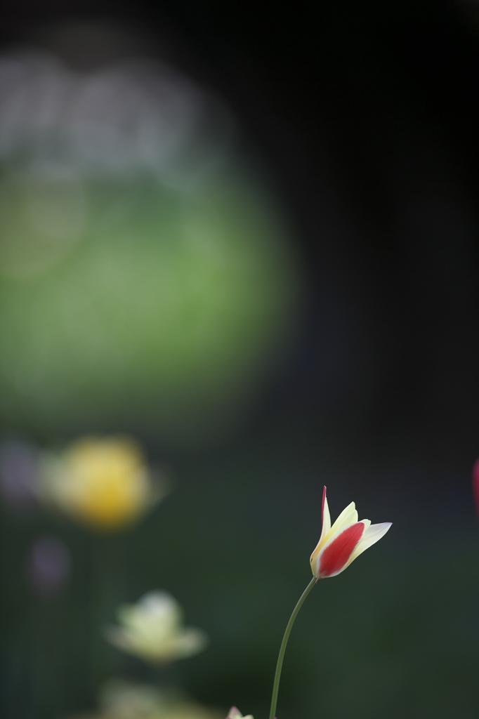妖精の森の花