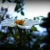 雨上がりの白