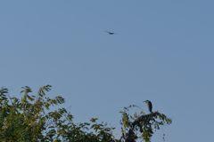 二羽の鳥 DSC_2516