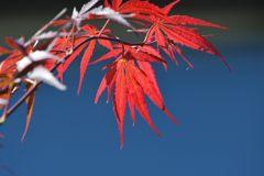 秋の色 2 DSC_8437