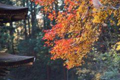 晩秋の色 DSC04571