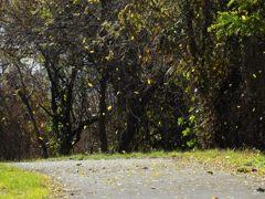 枯れ葉散る DSCN6886