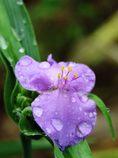 雨上がりの朝  IMG_2202