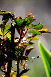 新芽の輝き  DSC_1609
