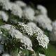 白い花 DSC_3419