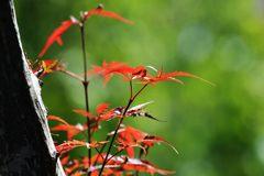 秋の色 4 DSC_8479