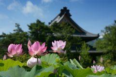 信濃国分寺本堂を背景に DSC_2822